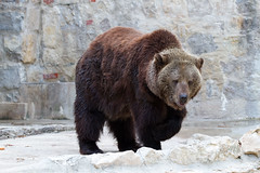 Vida de Urso (miza monteiro) Tags: zoo lisboa lisbon lisbonne ursos zoologico mamifero jardimzoologico
