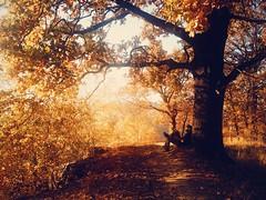Which my dady #autumn #three #dady #amazing #sunset #iphonephoto (samuelborek) Tags: autumn sunset three amazing dady iphonephoto