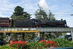 """The Kiama Picnic Train"". 5917, on 8S05, crosses the Terralong Street Viaduct in Kiama, Illawarra Line, NSW, 18th October, 2015. (garratt3) Tags: rail railway australia steam nsw newsouthwales locomotive aus railways railfan steamlocomotive steampower steamloco standardgauge nswgr lachlanvalleyrailway 59class nswheritage kiamapicnictrain"