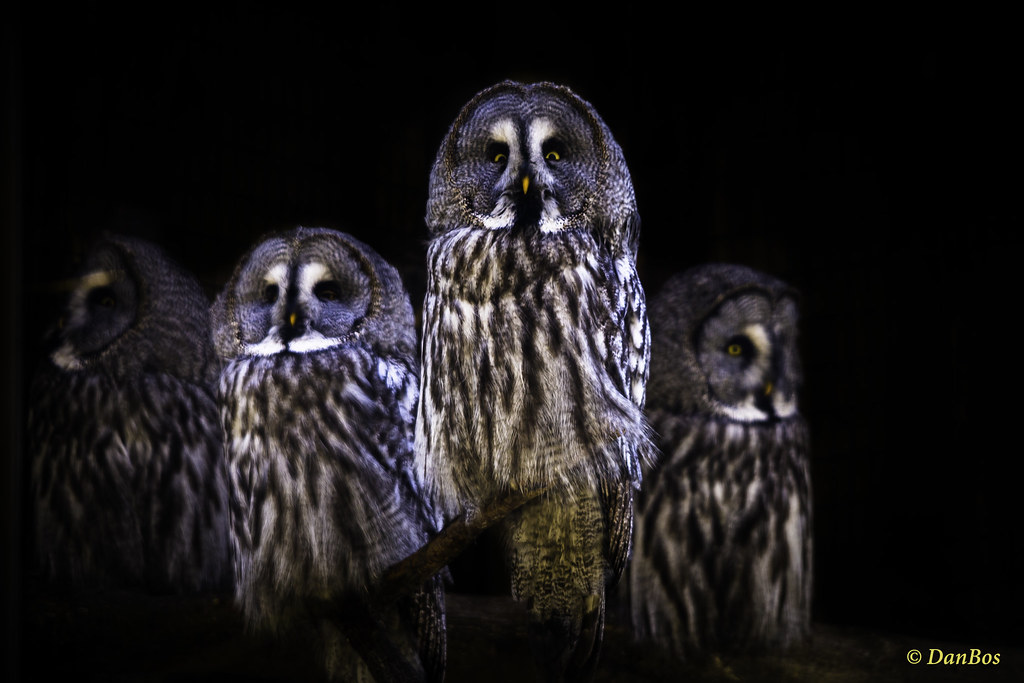 Owl family waiting for action