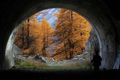 Val d'Aosta - Valsavarenche, fuori dal tunnel (mariagraziaschiapparelli) Tags: alberi foliage autunno valdaosta escursionismo camminata valsavarenche larici pontvalsavarenche pngp gruppodelgranparadiso allegrisinasceosidiventa
