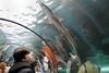 Wonder (crafty1tutu (Ann)) Tags: sealife aquarium darlingharbour sydney sydneyharbour animal fish shark amazement wonder interesting fun reflections reflection water tank crafty1tutu canon7dmkii canon24105lserieslens anncameron 52in2017challenge 14below underthesea