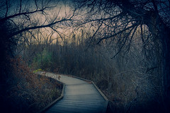The Path (J*Phillips) Tags: trees landscape winter brooding dark path morongovalley california drama