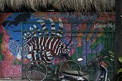 San Miguel, Cozumel Mexico (George Hamilton Photography) Tags: scubadiving cozumel mexico lionfish carribean