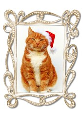 Merry Christmas to all my Flickr friends (tina777) Tags: christmas cat hat ginger frame diamante sparkle serif craft artist 2 manx tailless tim