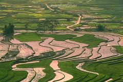 _Y2U7525+27.0515.Cao Phạ.Mù Cang Chải.Yên Bái (hoanglongphoto) Tags: asia asian vietnam northvietnam northwestvietnam landscape scenery vietnamlandscape vietnamscenery vietnamscene outdoor afternoon sunset terraces terracedfields terracedfieldsinvietnam transplantingseason sowingseason hdr canoneos1dx dale tâybắc yênbáimùcangchải caophạ lìmmông thunglũng thunglũnglìmmông phongcảnh ruộngbậcthang ruộngbậcthangmùcangchải buổichiều hoànghôn mùacấy đổnước lìmmôngmùacấy phongcảnhtâybắc canonef70200mmf28lisiiusmlens