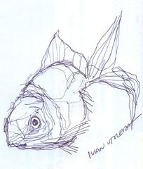 pez a lapicero (ivanutrera) Tags: pez draw dibujo drawing dibujoalapicero boligrafo animal sketch sketching sea seaworld fish pescado lapicero pen dibujoaboligrafo
