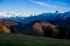 Aura Baum (Bugtris) Tags: gurnigel 2470f4l landschaft gantrisch wald abend canon 5dmkiii alpen gibelegg