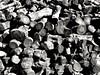 Woods (kallchar) Tags: woods wood many blackandwhite blackwhite monochrome nocolor olympusomdem10 trees nature cycles trunks forest winter pile