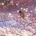 Backlit kingfisher