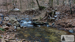 Morgenbachtal im Binger Wald