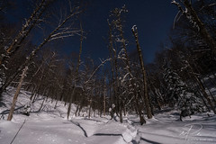 2017-01-08_-2.jpg (flyfast 70) Tags: night neige arbre nuit winter snow forest hiver longueexposision sky stars tree ©madeleinepunde forêt étoiles