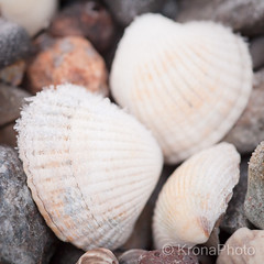 Winter beach, Norway (KronaPhoto) Tags: beach shell skjell ice frosty is dof macro norway natur nature cold frost strand