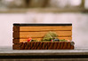 Bonk Bench (MartinBeckmann) Tags: tech deck fingerboard park ramp grind rail skateboard greasy bonk bonkbench benches shen fingerboardtv panasonic gh5 sample shot vsco bokeh olympus em5 em5ii raw bikini face