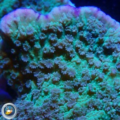 Aquarium Sales, maintenance, setup, leasing options available. Call us for a no obligation site visit. Serving all of Orange, LA and San Diego counties. 20 years experience. 714.881.2991 info@cre-oc.com #coralreefenthusiast #creoc #n2coral #aquarium #serv (Coral Reef Enthusiast) Tags: polyplab underwaterworld scuba service instaphoto marine amazing ocean lease photooftheday scubadiverlife underwater creoc marinedepot photo socalreefs scubadiver scubadive animals photograph photographer underwaterphotograpy coralreefenthusiast aquarium travel n2coral