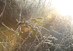 On a cold and frosty morning (ArthurFentaman) Tags: autumn backdrop background beautiful beauty brown chill christmas closeup cold crystals day fall freeze freezing frost frosty frozen garden gold grass green hoar hoarfrost holiday ice icy late leaf leaves macro natural nature pattern plant plants red season seasonal seasons snow snowflake snowy sun texture tree weather white winter yellow