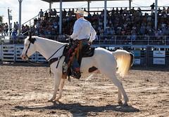 P3110172 (David W. Burrows) Tags: cowboys cowgirls horses cattle bullriding saddlebronc cowboy boots ranch florida ranching children girls boys hats clown bullfighters bullfighting