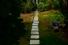 DSC08310 (Daria_della_Noce) Tags: summer verde green home way estate august vert via agosto romania autostrada vara carare turda 25august waytohome sonynexf3 sonynexf3k