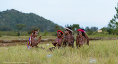 DSC_1546 (Tatyana Kildisheva) Tags: tourism indonesia asia southeastasia traveling papua tropics baliemvalley путешествие wamena republicofindonesia republikindonesia азия индонезия юговосточнаяазия balimvalley