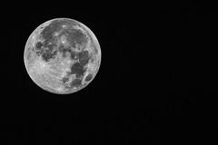 Vollmond (seelengalerie) Tags: moon mond all sommer sony natur luna land landschaft wald kamera freie imgrnen muttererde insgrne naturreich unberhrtelandschaft feldundwald a77ii ilca77m2 tierundpflanzenwelt alpha77m2
