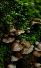 Mushroom colony (MelisaTG) Tags: summer nature leaves canon outdoors woods outdoor arnhem macrophotography closeupphotography flowersplants canon600d