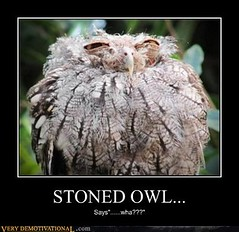 STONED OWL... (Chikkenburger) Tags: posters memes demotivational cheezburger workharder memebase verydemotivational notsmarter chikkenburger