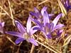 Desert Life (Heather's Reflections Photography) Tags: california nature golden purple desert wildflowers purplewildflowers yellowgrass goldengrass