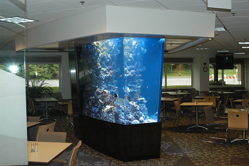 1300 Gal Custom Living Reef - Corporate Office - CT - 1