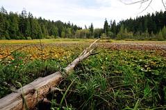 Beaver Lake (J-Fish) Tags: lake canada vancouver log stanleypark beaverlake britishcolombia d300s 1685mmf3556gvr 1685mmvr