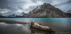 Bow Lake ([v] style + imagery) Tags: longexposure lake canada log ooak bowlake canadianrockies snowcappedmountain lakemoraine glacierfedlake