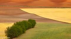 Juego de tonos. (juguzcam) Tags: espaa brown verde green yellow spain amarillo cereals cereales cuenca lamancha marrn mygearandme mygearandmepremium mygearandmebronze mygearandmesilver mygearandmegold mygearandmeplatinum mygearandmediamond