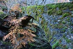 Linescio 664m - Morella 1225m - Lago di Sascla 1740m (Photo by Lele) Tags: lago ticino mani val di alpini svizzera autunno colori alpi montagna daniele vallemaggia morella laghi svizzere 1740m rovana autunnali 664m linescio sascla 1225m