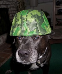 Sargent Talla (cjacobs53) Tags: dog hat labrador helmet retriever cap camouflage whisker jacobs jacobsusa