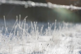 Sparkle-fence