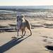 Laika's Long Shadow (Morning Beach Time!)
