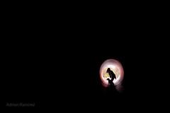 escape (aramirezpho) Tags: arizona blackandwhite bw dog black monochrome silhouette dark darkness tucson background tube pipe surreal tunnel ring rings youngadult lightandshadow lookingback cityoftucson