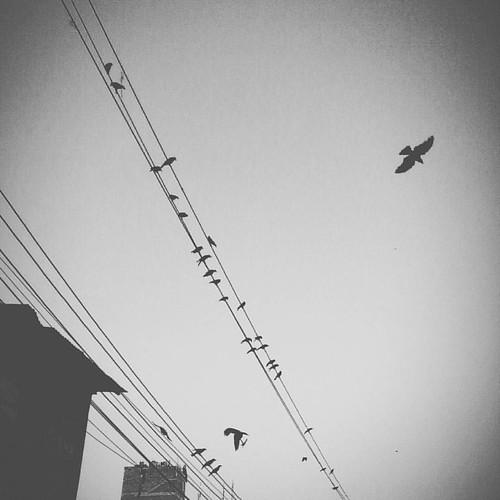 Long lost... ... #birds #birdsofinstagram #crow #urban #urbanbirds #minimal #minimalism #minimalistic #minimalist #bnw #bnw_life #blackandwhite #blackandwhitephotography #monochrome #instapic #instagood #instadaily #photoaday #photooftheday #mobile #mobil