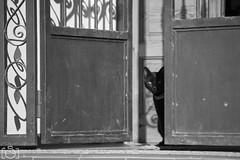 Negro Antonio (Sento MM) Tags: animal negro gato domestico