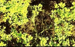 Les hauteurs de Saint-Auban (43) (Sebmanstar) Tags: travel light france color nature digital french landscape photography europa europe pentax explore paysage campagne couleur ballade aerodrome hauteur exterieur saintauban provencealpesctedazur