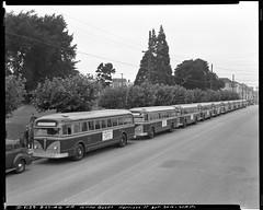 D5129 (market street railway) Tags: 1946 25thstreet 26thstreet august27 august271946 californiaca dseries d5129 garfieldsquare georgefanningphotographer harrisonstreet missiondistrict motorcoach0127 motorcoach0133 motorcoach0152 motorcoachbus munipuccollection publicutilitiescommissionpuc sfmtaphotoarchive sanfrancisco sanfranciscomunicipalrailwaymuni tenmorenewbusessign whitebrandbus ca usa us