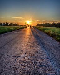 Sun Cycle (adamkylejackson) Tags: sunrise bike bicycle sunset houston texas trails hiking grass trees morning sun sunstar