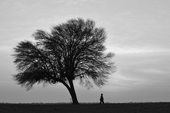 (Claudio Blanc) Tags: bn bw entreríos argentina amanecer paisaje blackandwhite blancoynegro silueta silhouette silhoutte