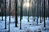 hello 2017! (farbstich.) Tags: forest nature winter snow haard sunshine beech trees buche wald hdr