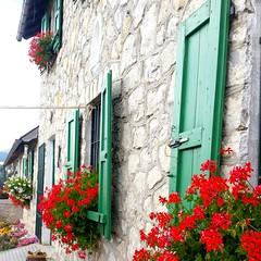 Asiago - Italy (jocelynejohansson) Tags: asiago italy flowers mountains nature