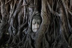 the most photographed (raffaele pagani) Tags: parcostoricodiayutthaya phranakhonsiayutthaya พระนครศรีอยุธยา thailandia thailand unesco unescoworldheritagesite unescopatrimoniomondialedellumanità patrimoniodellunesco patrimoniomondialedellumanità canon