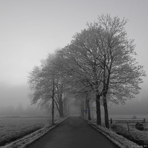 Winter in Haren