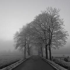 Winter in Haren (koos.dewit) Tags: nl 2016 groningen haren holland koosdewit koosdewitnl thenetherlands frost landscape mist misty snow tree trees winter