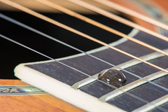 While My Guitar Gently Weeps (jeff's pixels) Tags: inspiredbyasong macromondays guitar beatles macro water drop whilemyguitargentlyweeps strings instrument ovation fret board