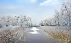 Winter Scene (Paula Darwinkel) Tags: winter snow ice cold landscape scenery white sky blue netherlands
