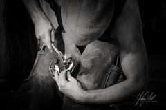 Farrier (AnthonyCNeill) Tags: farrier blacksmith blackwhite blackandwhite lowkey clavebaja horse horseshoe hammer cap man worker tradesman shadow light focus muscular black white nikon d7000 work art artistic shoe shodding shod racehorse thoroughbred monochrome